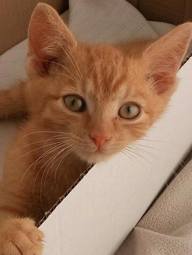 10 فوائد صحية لامتلاك القطط