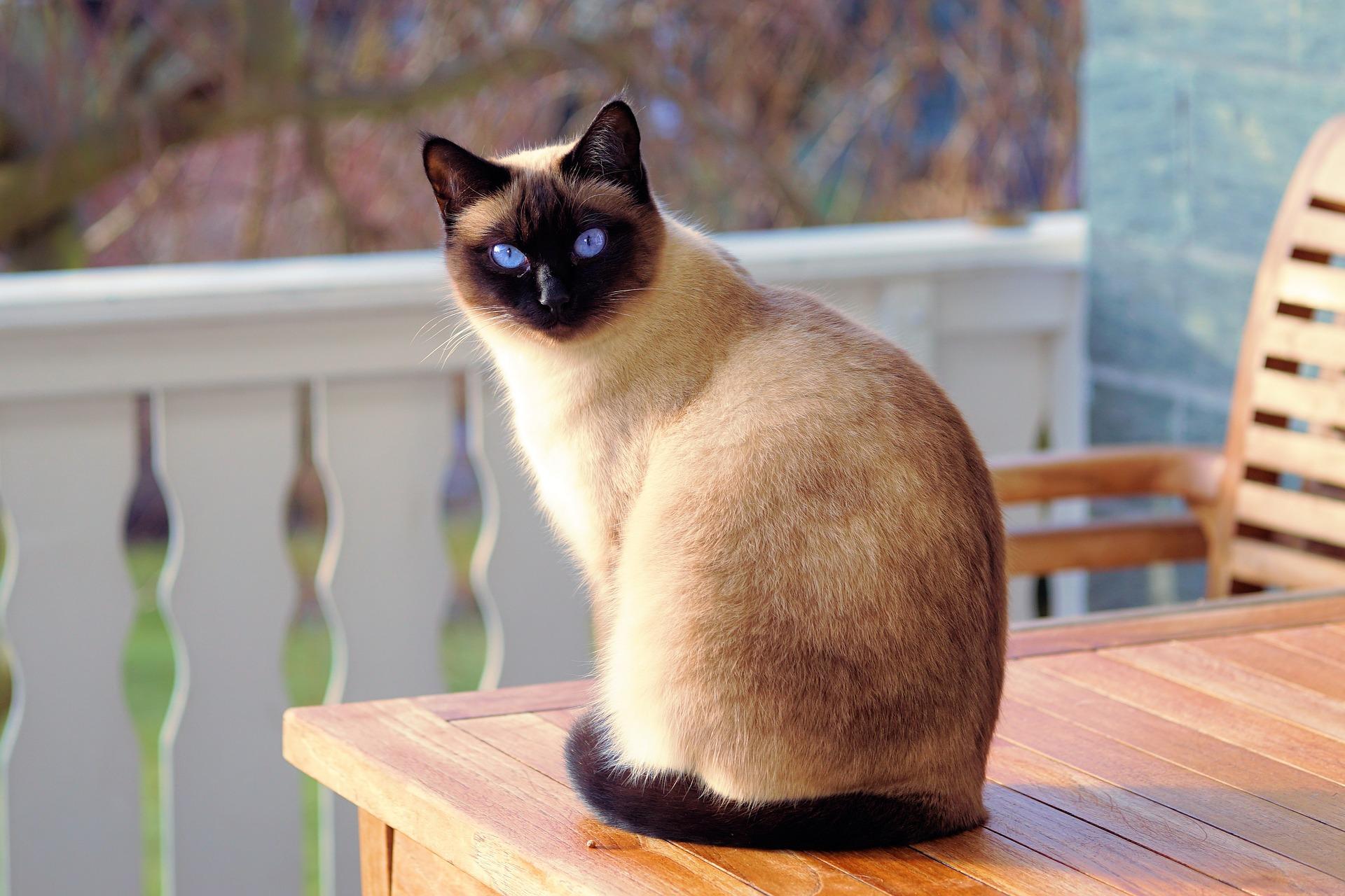 حقائق مذهلة عن القطط قد لا تعرفها آهلا بك في ويكي ويب الموسوعة العربية