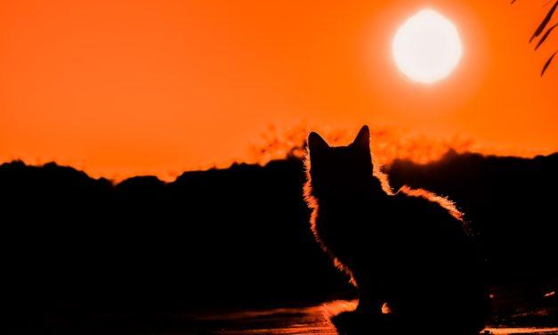 حقائق مذهلة عن القطط