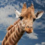 حقائق غريبة عن الحيوانات