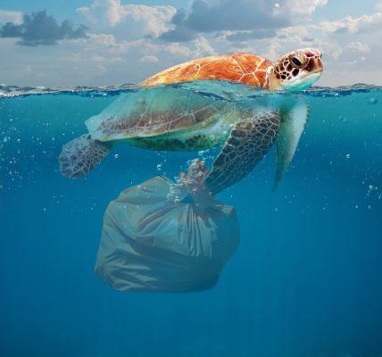 دوامة القمامة في المحيط الهادئ.