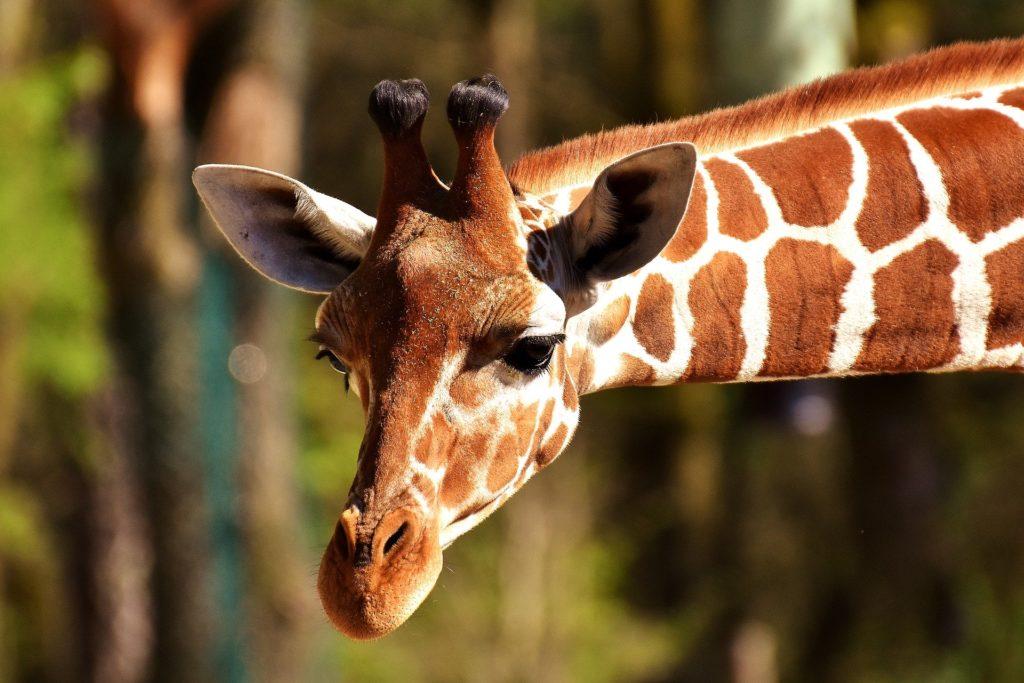 حقائق جديدة وممتعة عن الحيوانات